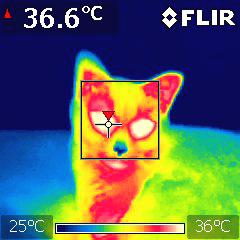 赤外線サーモグラフィ で猫を観察した時の画像 MOMO1