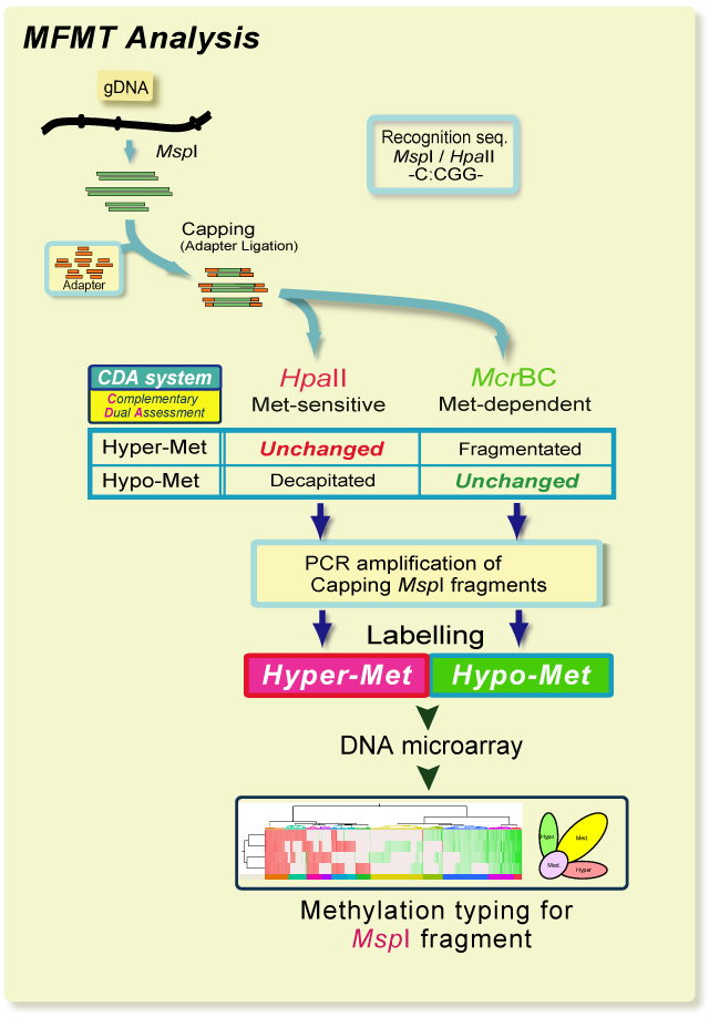 DNAメチル化解析,MFMT: A comprehensive DNA methylation analysis, MspI, McrBC
